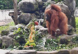 Hope, koleksi GL Zoo.
