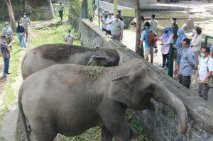 bayi gajah koleksinya yang lahir di saat pandemi Covid-19 dinamai Arinta