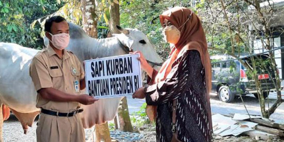 bantuan hewan kurban dari presiden